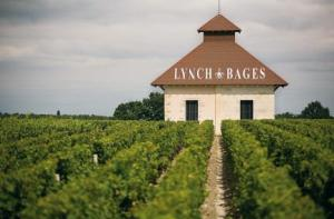 the vineyard Chateau Lynch bages